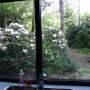 tuin-vanuit-de-keuken-scaled